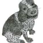 """Cocker Spaniel Pencil Sketch"" by janemcdougall"
