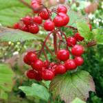 """""""autumn berries"""" by MyTreasuredImages"""