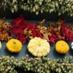 """Fall Line-up"" by JanaSinor"