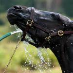 """""""Cooling Down on a Hot Summer Day: Horse Hose Wash"""" by WilshireImages"""