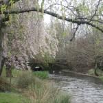"""""""Spring SE Westmoreland Park"""" by BarbaraBerger"""