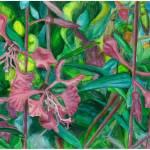 """Clarkia graceful"" by florist59"