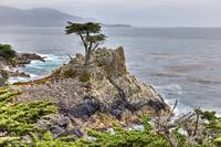 Pacific Ocean With Lone Cypress