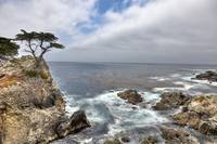 Lone Cypress of Monterey