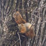 """Hang In There Baby! (squirrel)"" by PhotoArtbyAnjanette"