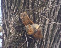 Hang In There Baby! (squirrel)