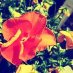 """""""Orange & Yellow Edit"""" by TheSkyPhotography"""