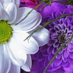 """Bouquet"" by audioworm"
