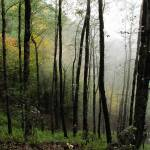 """""""Forest in Fog"""" by Shervin"""