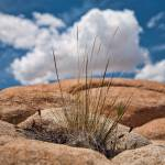 """Grass in Desert Rock"" by johncorney"