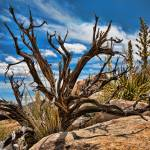 """Dead Tree Desert Landscape"" by johncorney"