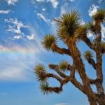 """Joshua Tree Virga"" by johncorney"