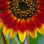 """""""Sunny"""" by MarinaCastillo"""