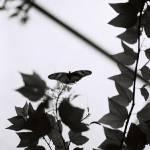 """""""Butterfly 3"""" by TerraformDesign"""