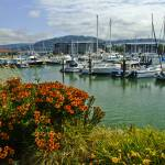 """Bellingham Harbor with Flowers"" by awsheffield"
