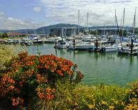 Bellingham Harbor with Flowers