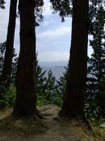 Sea through trees - Chuckanut Road