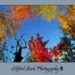 """""""Autumn Sky"""" by chow5325"""