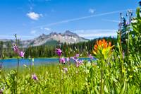 Indian paintbrush, Shooting Stars, Santiam lake &