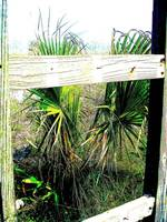 Tropical Plants through Fencing