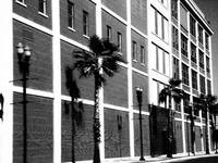 Side Building of Palm Trees