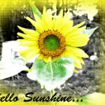 """""""Hello Sunshine"""" by TheSkyPhotography"""