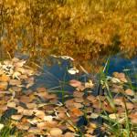 """sierra reflections"" by jebrunner58"