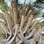 """""""Up A Palm"""" by JenniferStockman"""