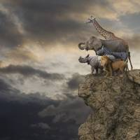 """Animals On The Edge"" by johnlund"