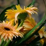 """""""Bouquet"""" by C_Rivait"""