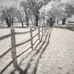 """Outsider - Infrared Trees Landscape"" by miir"