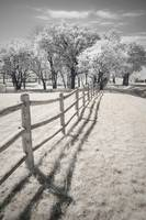 Outsider - Infrared Trees Landscape