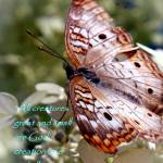 """""""creation"""" by MyTreasuredImages"""
