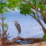 """Through the Mangroves"" by mdarrah"