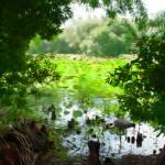 """""""Heron Pond"""" by mdarrah"""
