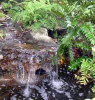 Small Waterfall Garden I