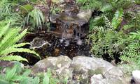 Botanical Waterfall I