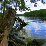 """Suwannee River Wood I"" by SLMcLeroy"