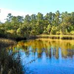 """Lower Suwannee Wildlife Refuge TN I"" by SLMcLeroy"