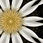 """Square Daisy"" by JennyHudson"
