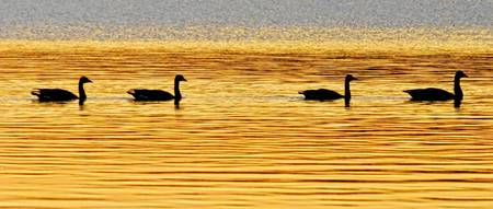 On Golden Pond