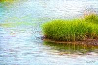 Creek Grass