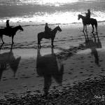 """beach horses"" by artfilmusic"