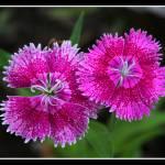 """""""flores raras"""" by patriciorc"""