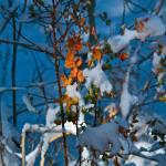"""""""Winter color"""" by jebrunner58"""