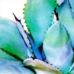 """Agave No. 1"" by MBush1us"