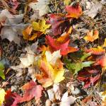 """Fall Floor"" by KatesGrace"
