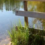 """Lakeside Fence"" by KatesGrace"