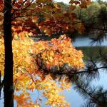 """Autumn Glow"" by KatesGrace"