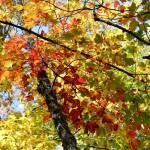 """Autumn Canopy"" by KatesGrace"